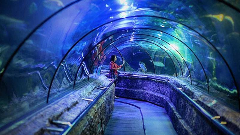 Seaworld-Ancol